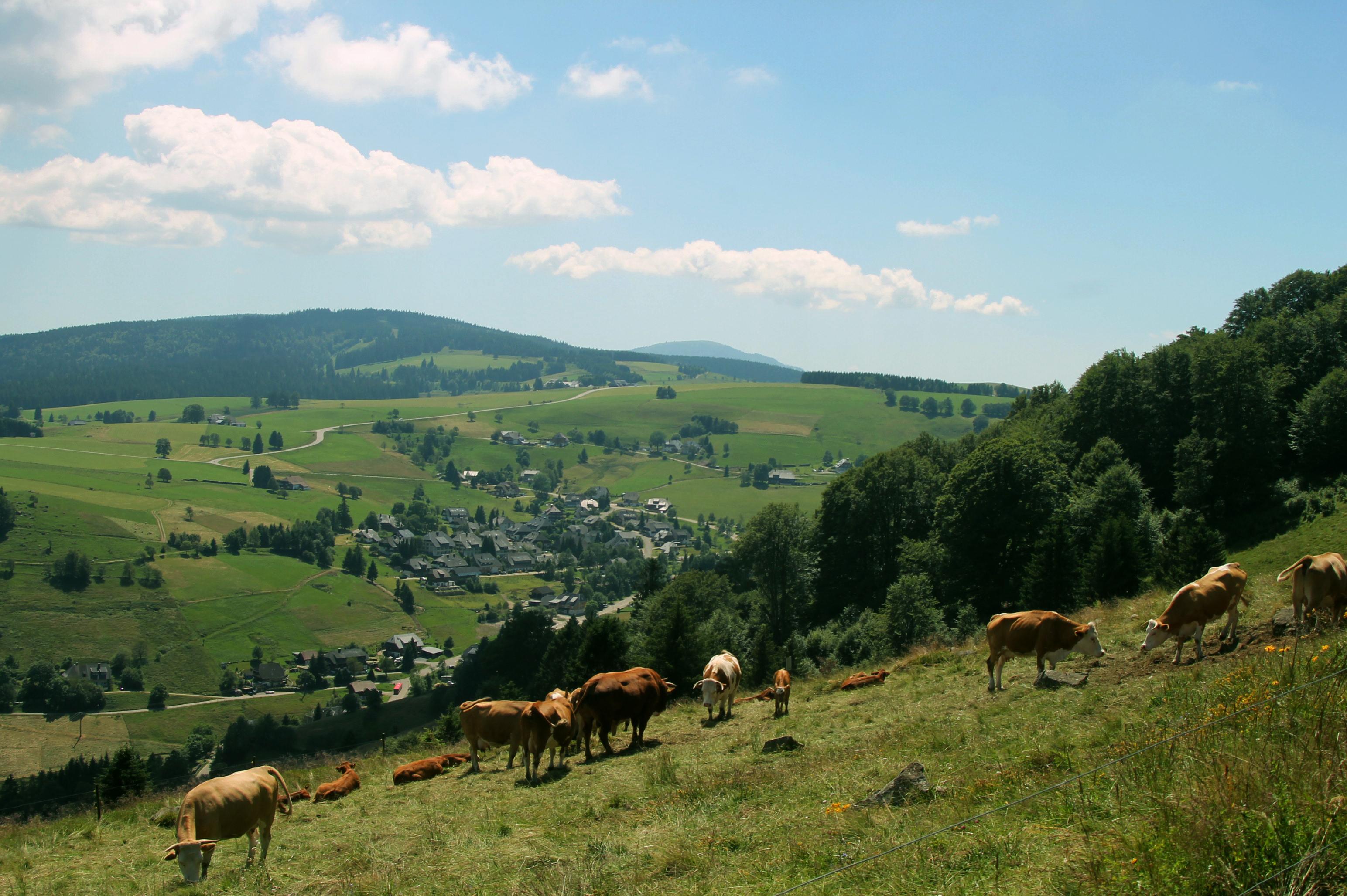 KochTrotz bei LAC - Schwarzwaldmilch | Freiburg