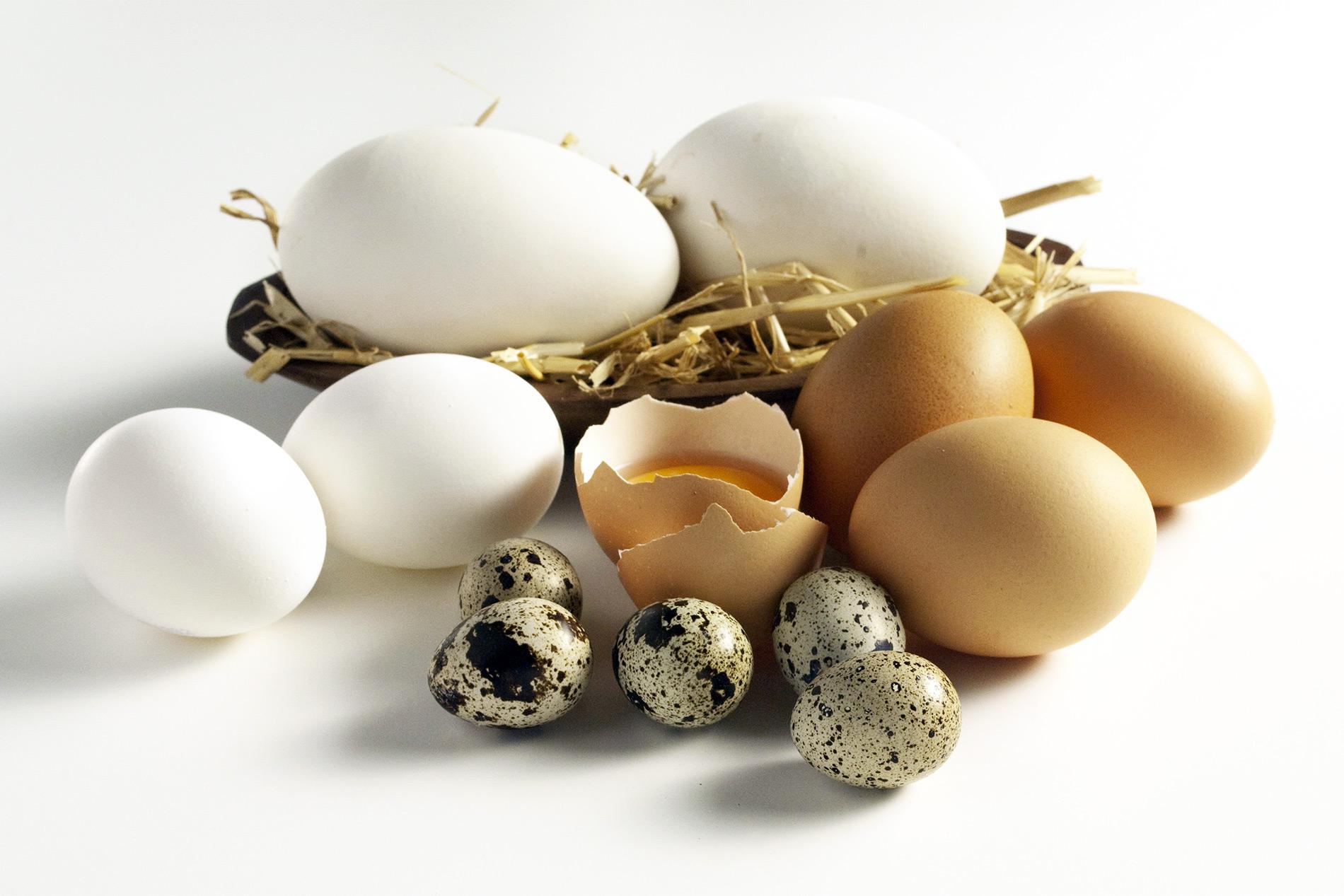 Alternativen bei Hühnerei-Allergie | wie gehe ich mit Eiern anderer Vögel um | Berechnung von Eimengen | viele Informationen rund um Eier
