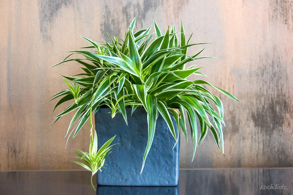 Drei Monate Dauerstress, die fatalen Folgen und warum wir jetzt Pflanzen haben!