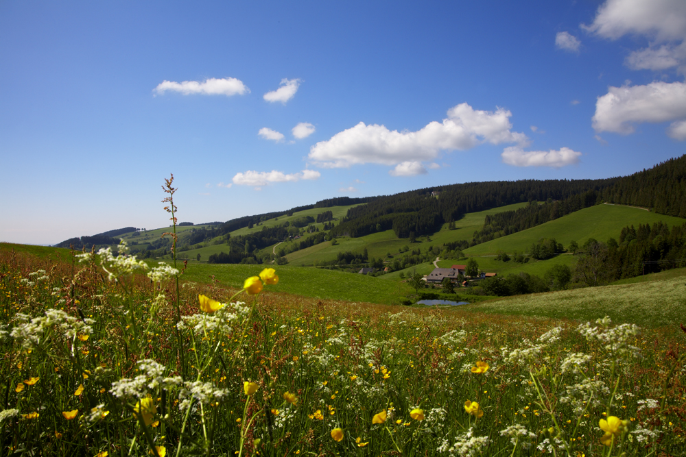 KochTrotz bei LAC - Schwarzwaldmilch   Freiburg